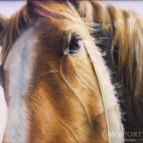 obraz-morda-konia