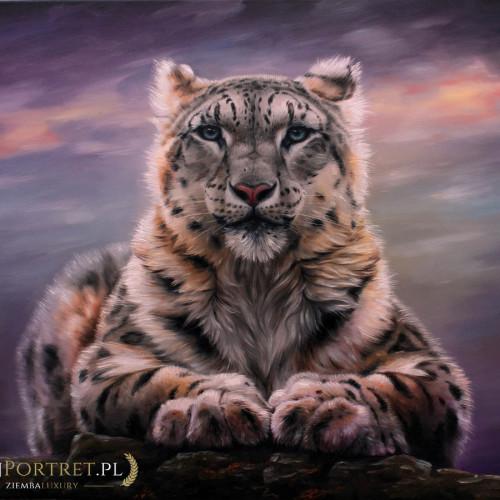 tygrys-bialy